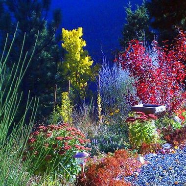 Rocky Mountain Garden!