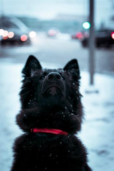 Chasing snowflakes.