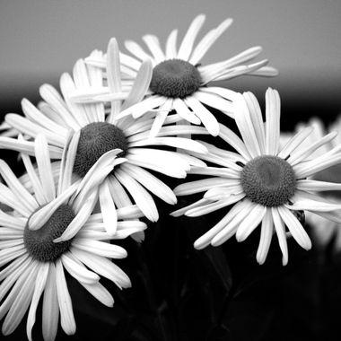 daisy hugs