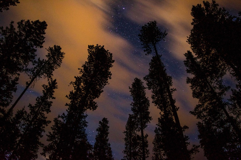 Hazy, unnaturally colored clouds pass over a pine forest in Banff National Park, obscuring the co...