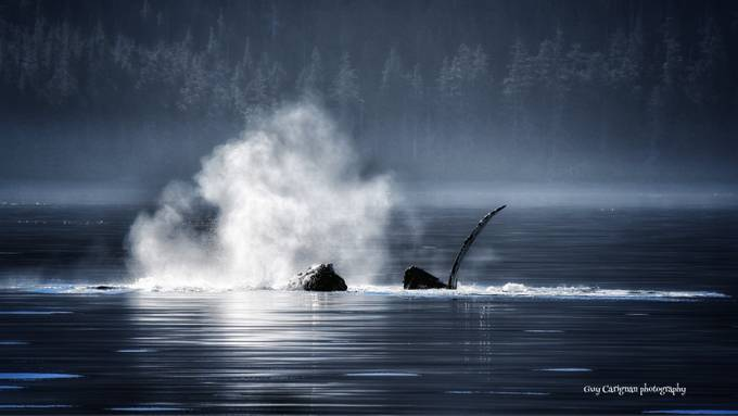 Humpback morning by Thatsguy - Wildlife And Water Photo Contest