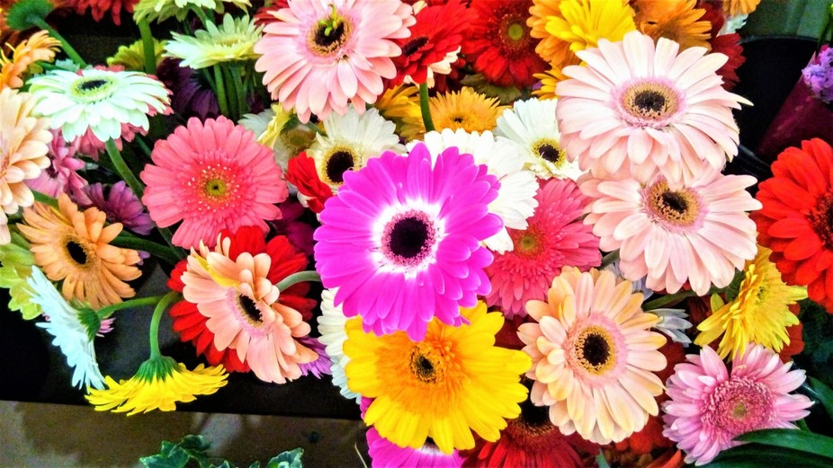 Flowers and Colours II