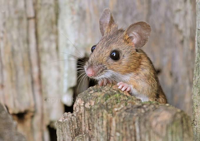 Adventurous  by pixelcatcher - Small Wildlife Photo Contest
