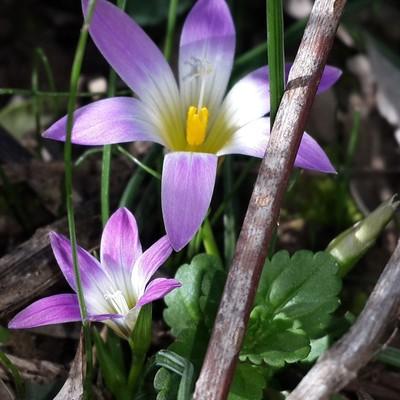 Tama_photogh flowers
