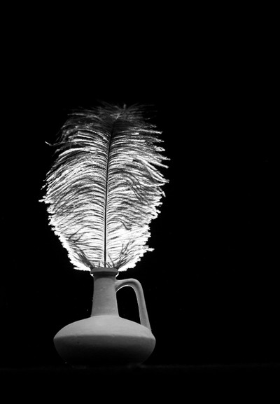 Still life with ostrich feather 3