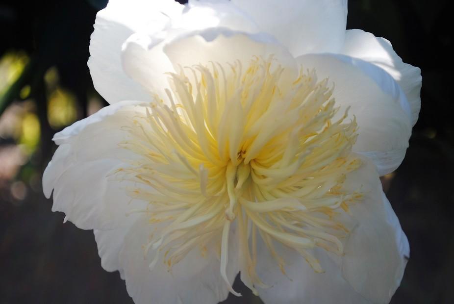 The Flowering Echinos