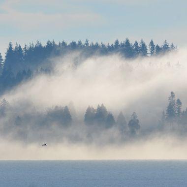 Land Fog