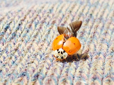 Ladybug's micro-quests