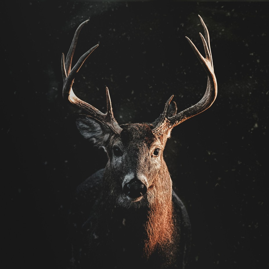 Stare  by sebastian_harvey - Big Mammals Photo Contest