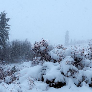 Fog on Hamilton Hill near Merritt B C .