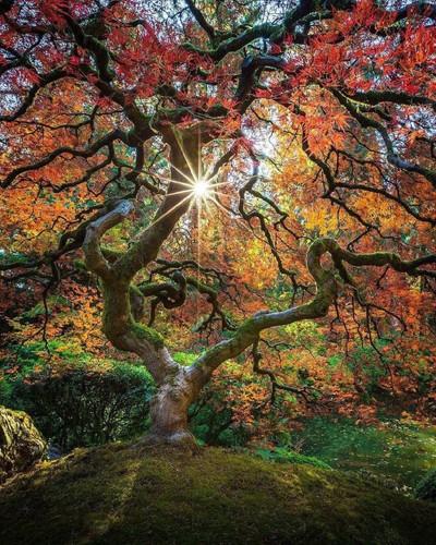 nature.orange