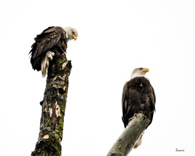 Eagle Roost