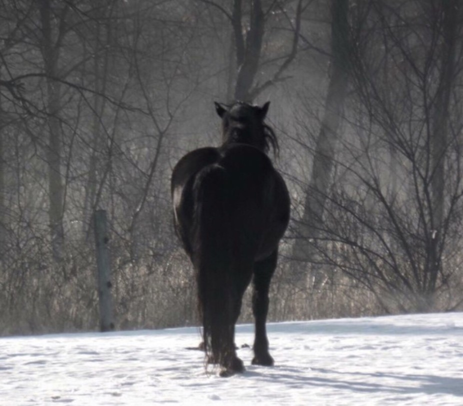 Horse fog
