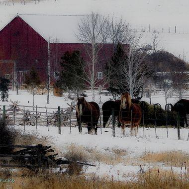 A barnyard at Stump Lake B C