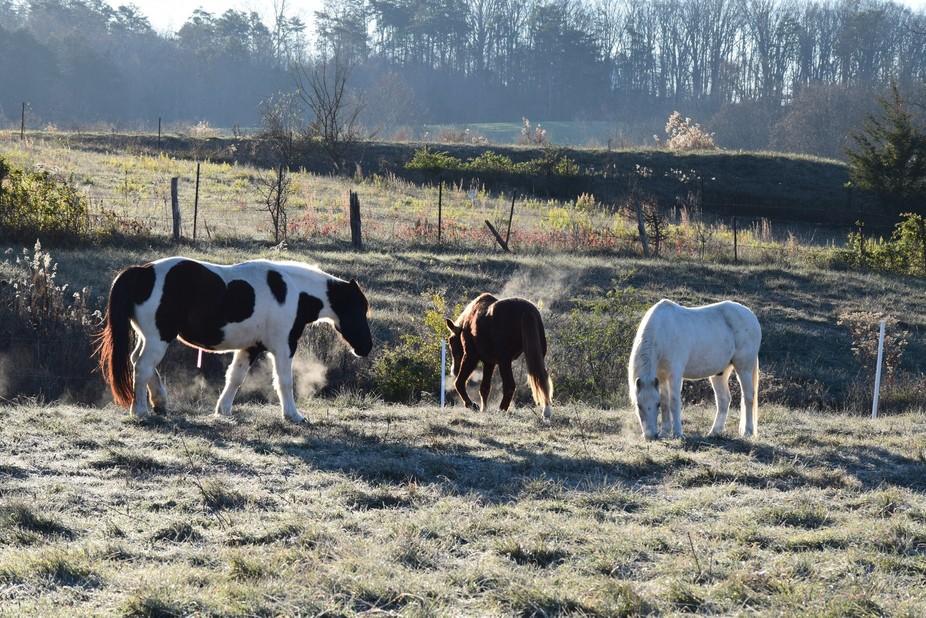 Enjoying my morning with my Horses.