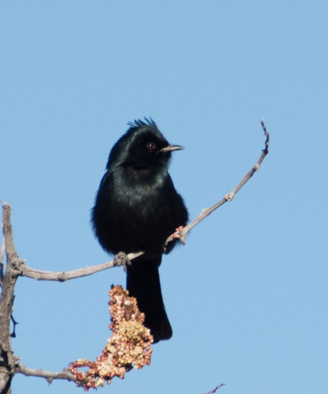 Taken in Saguaro National Monument East  Tucson