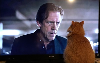 Our cat Leon Sphinx having a stare down with an actor on the tv screen