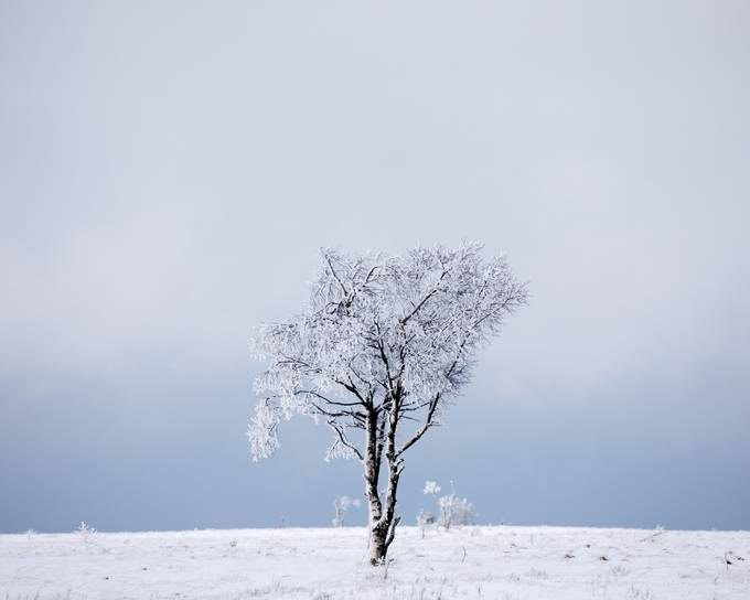 One single tree by nandoharmsen - We Love The Winter Photo Contest