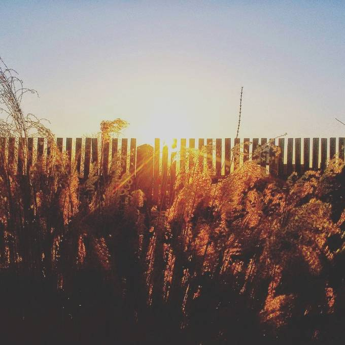 Sunrise early morning in my backyard..