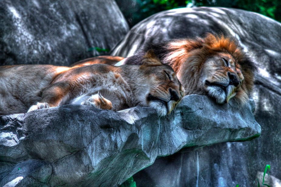 This is Henry and Vilas. They were two long term residents at the Henry Vilas zoo in Madison WI.
