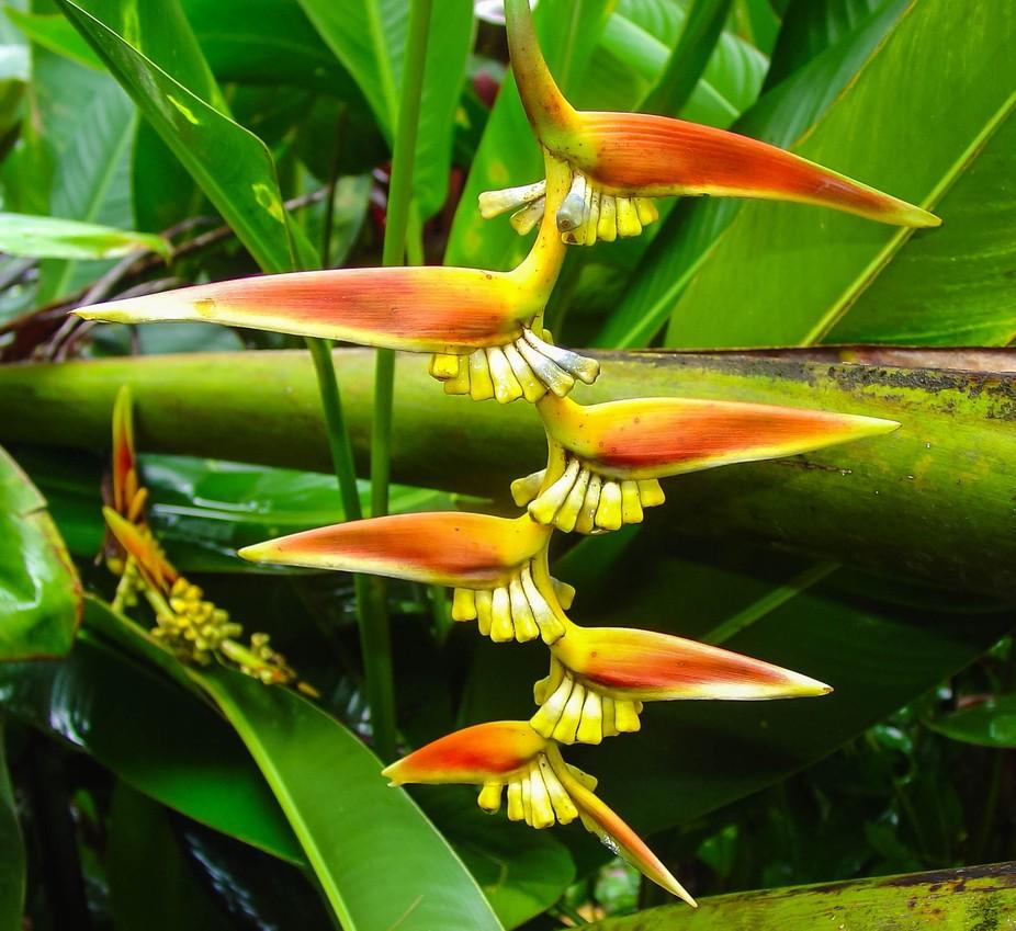 Symetrical Plant