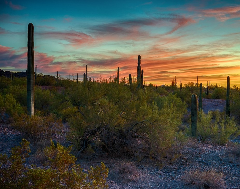 The sonoran desert at sunset, pink clouds add to the breathtaking view of the desert._GAL0076 10-...