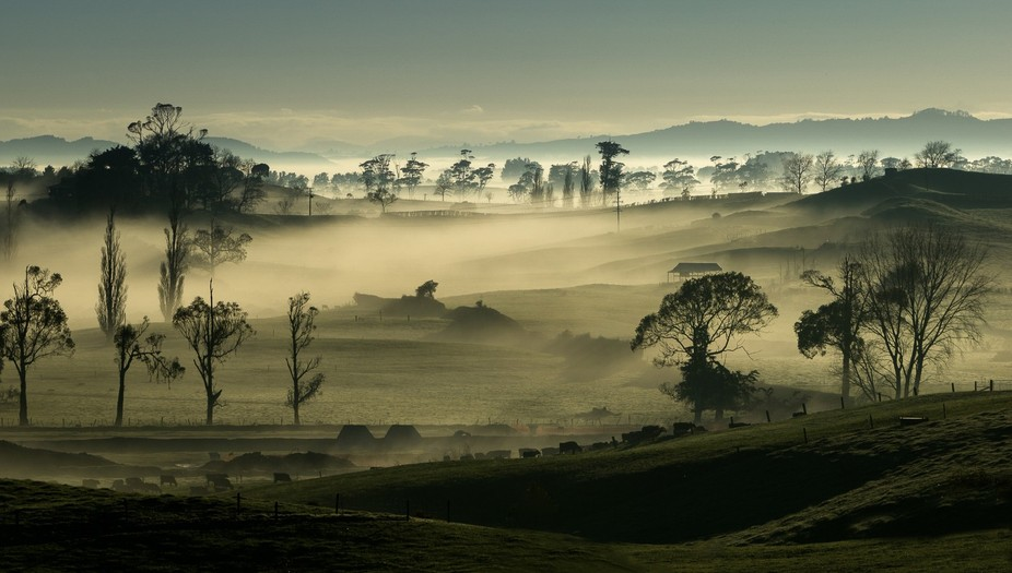 NZ rural scene
