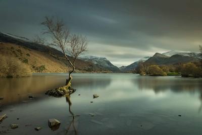 """The lone tree"" llanberis, snowdonia"