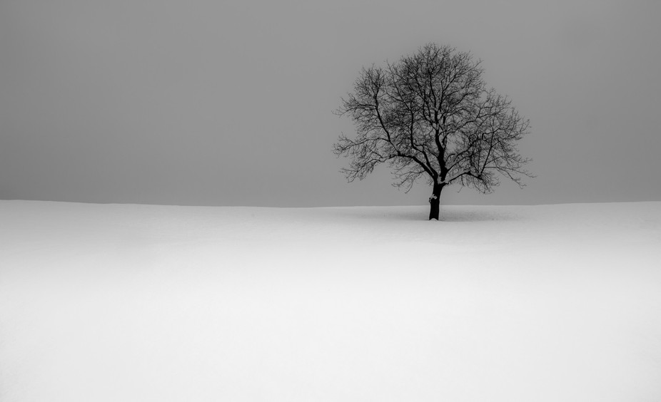 This isolated tree was in my eye sight for a year now and the last snowfall was just perfect to g...