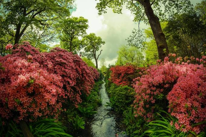 Isabella Plantation Richmond Park by samcabal - Streams In Nature Photo Contest