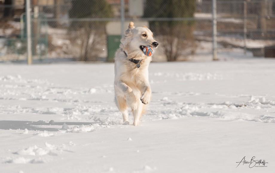 My buddy Finn enjoying the snow.