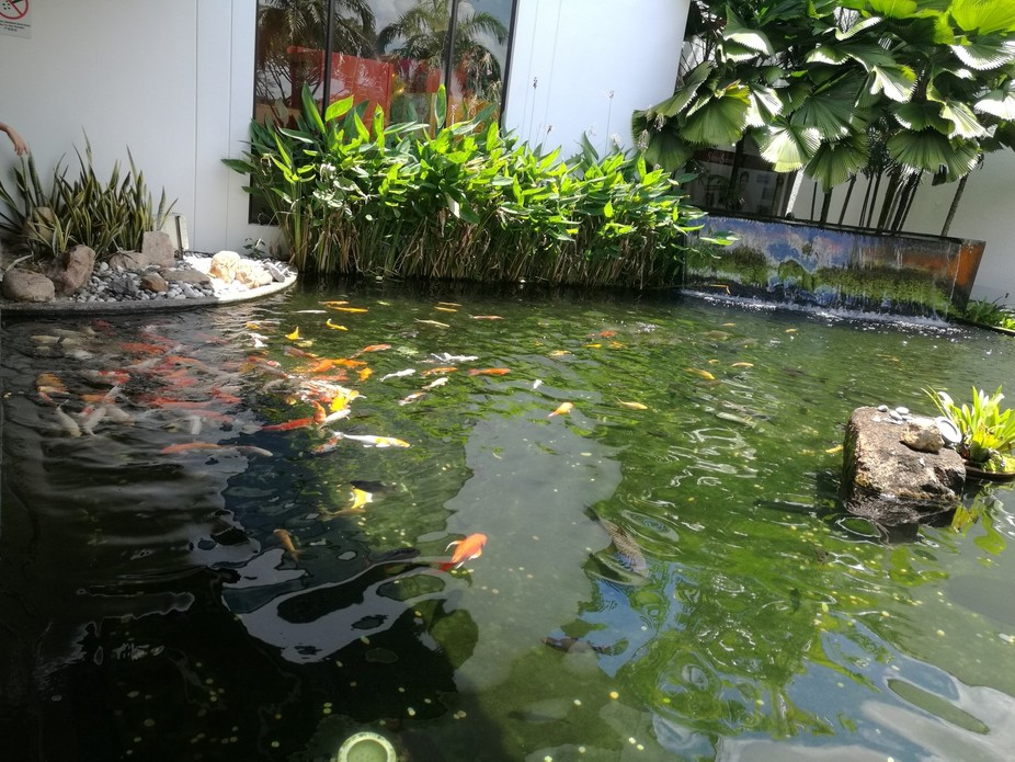 A pool, teeming with life in a mall in Johore Bahru.