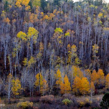 Fall Hill Side Bear Lodge