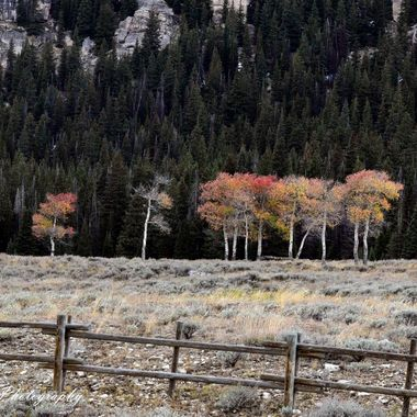 Fall color in the Bighorn Mountains of Wyoming.