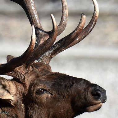 This guy lives at Jasper Alberta.