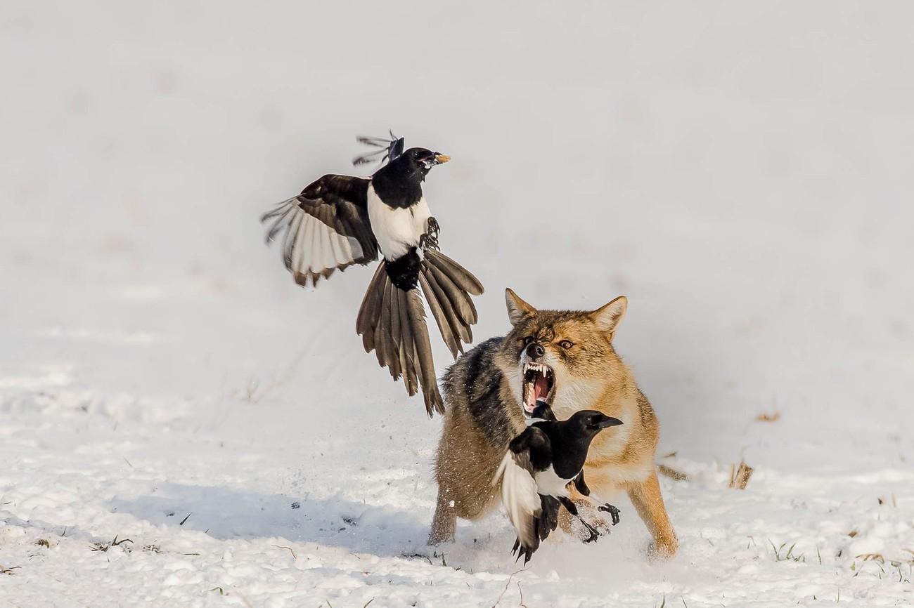 28 Unbelievable Shots Of Winter Wildlife