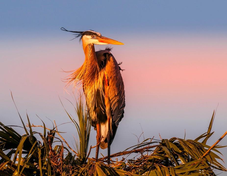 Taken at Viera Wetlands