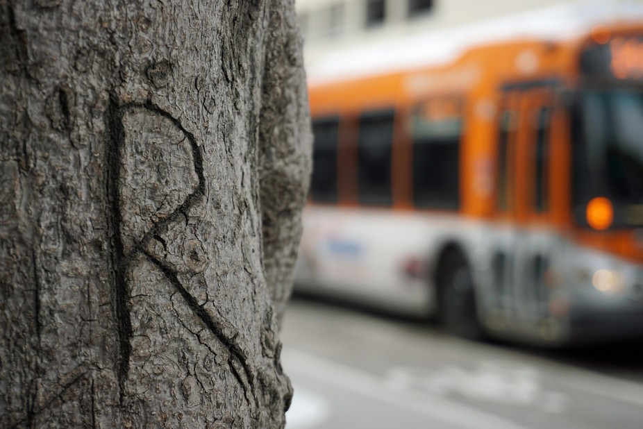 Letter R carved into a tree in downtown LA, ca