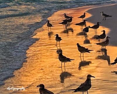 Seabirds and sunset !