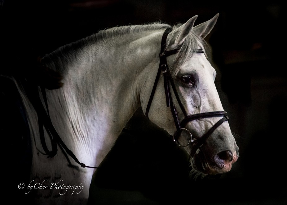 AndalusionHorseShow-4410