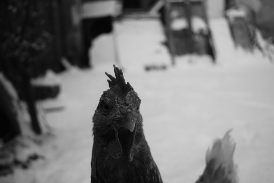 Even that was the first time in 30 years that snowed in Tirana and was cold, my house pet, &q...