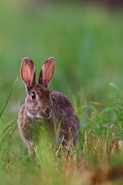 Rabbit IMG_1817a