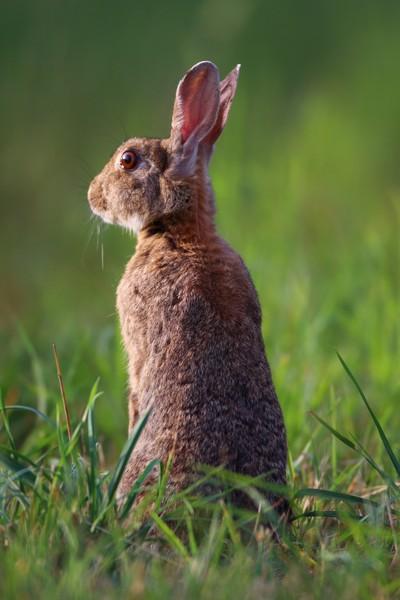 Rabbit IMG_1861a