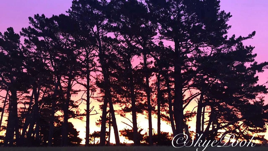 Completely Natural, beautiful colours, Pine Trees, view from my back door