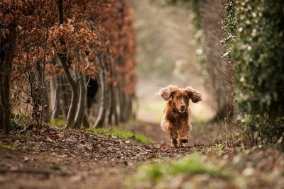 Dog Portrait Shoot Feb 18