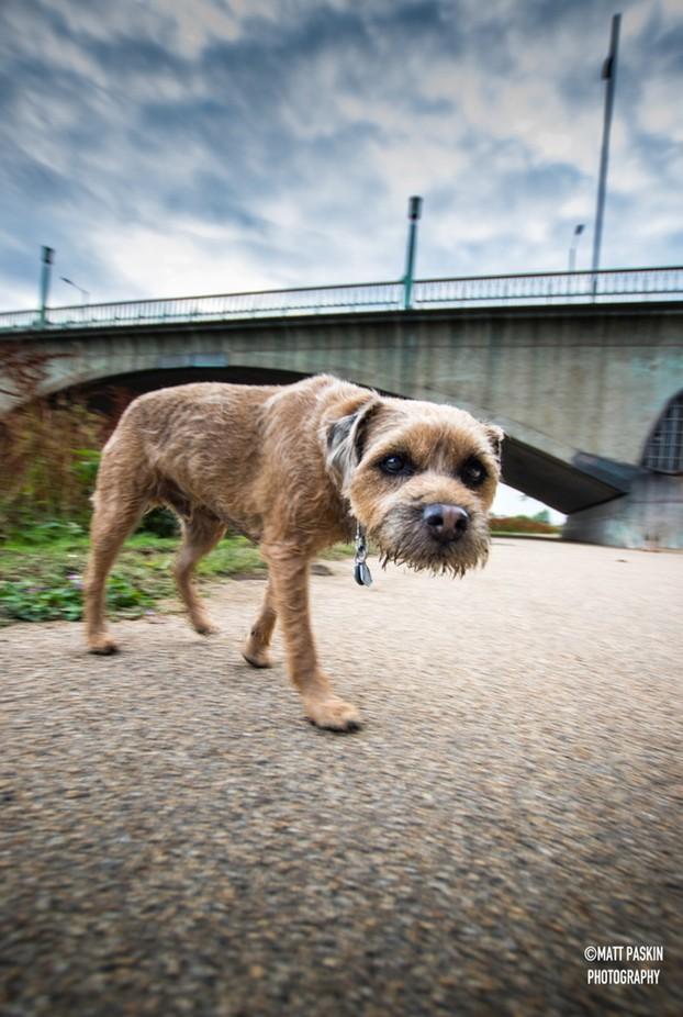 Dog Patrol. by mattpaskinphoto - Stunning POV Photo Contest
