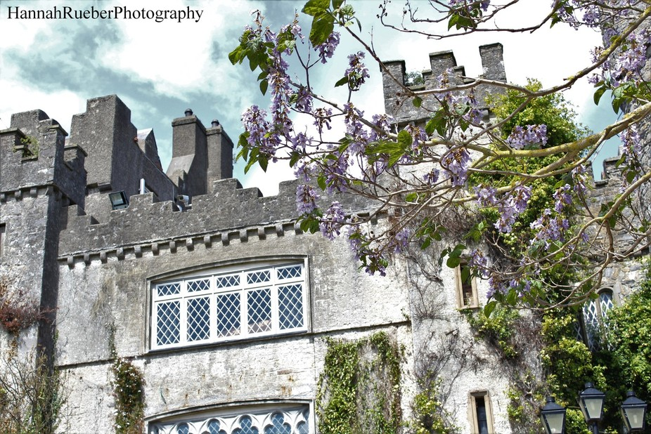 Malahide Castle (near Dublin, Ireland) in May