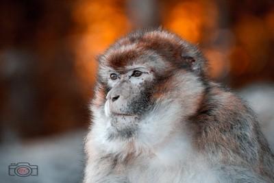 maggot monkey