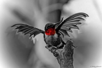Dragonbird