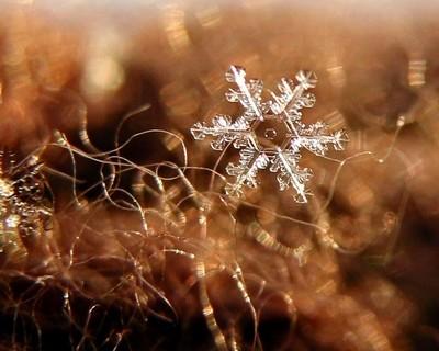 Snowflake on Brown